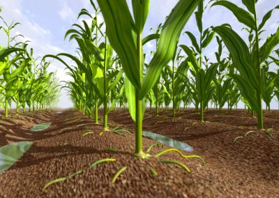 Corn Field, built in 3D graphics for product animation